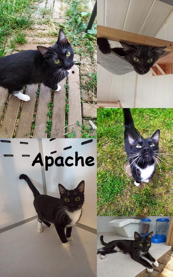 APACHE : annonce type pour sites gratuits Apache11
