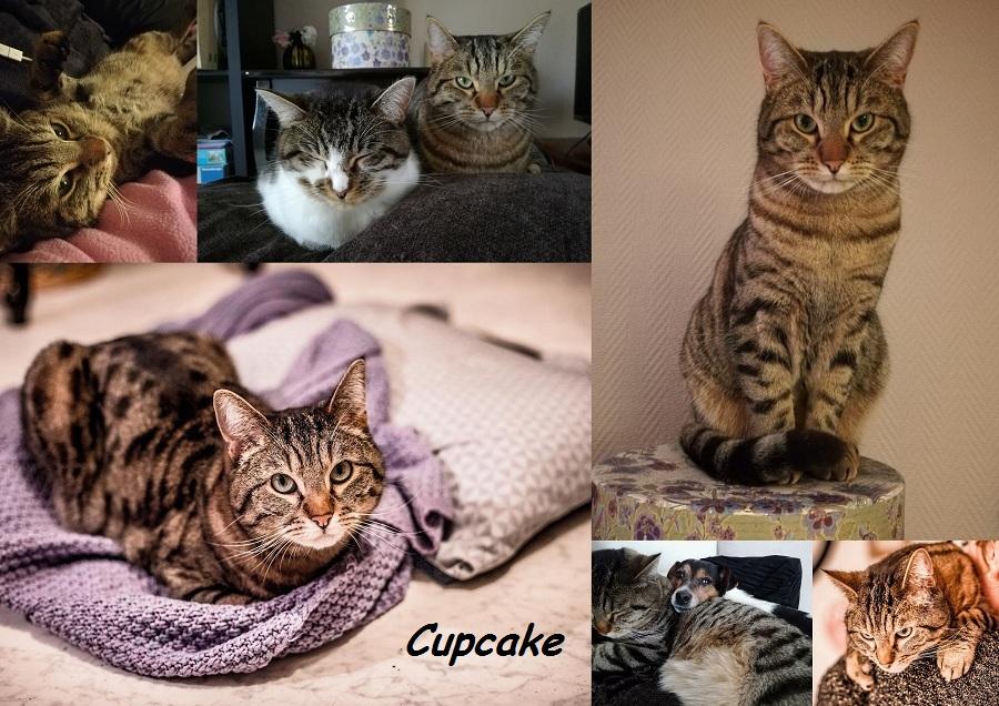 CUPCAKE : annonce type pour sites gratuits Cupcak11