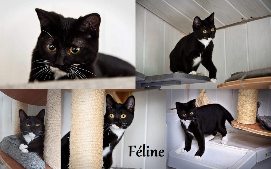 FELINE, chat femelle Fzolin20