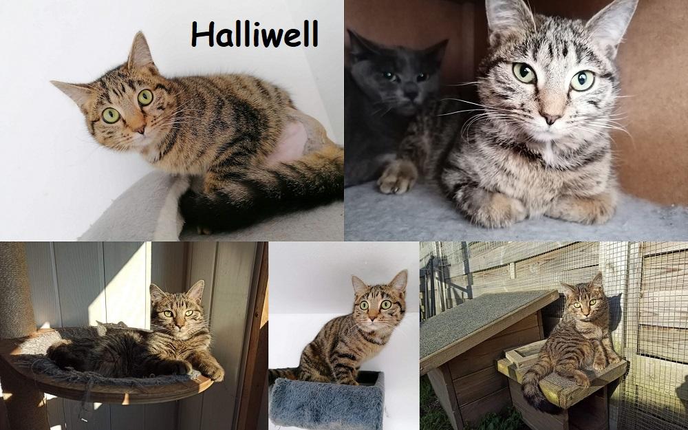 HALLIWELL, chat femelle Halliw21
