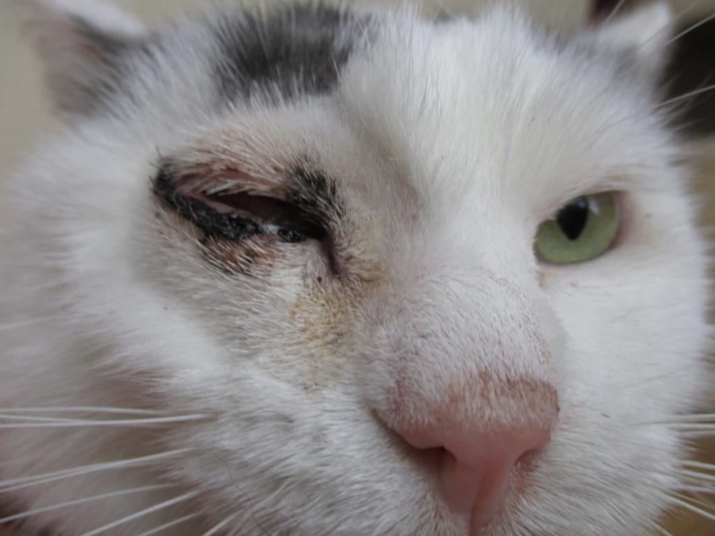 Chirurgie de l'oeil récalcitrant Img_0414