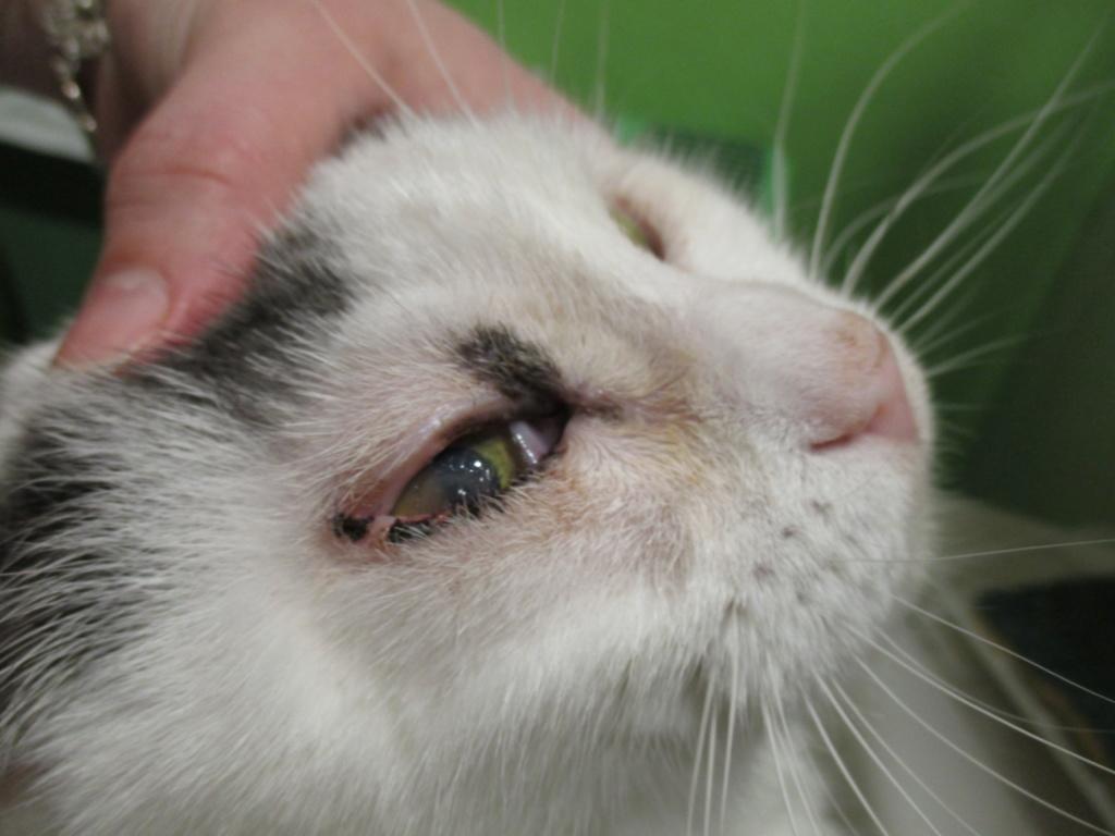 Chirurgie de l'oeil récalcitrant Img_0611