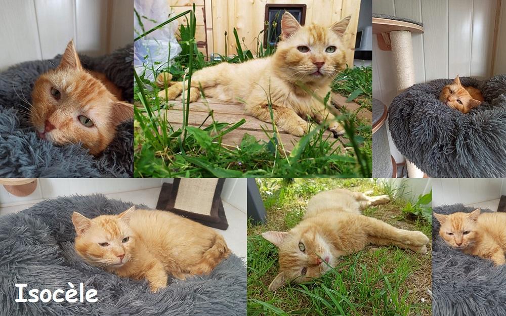 ISOCELE, chat mâle Isoczo23