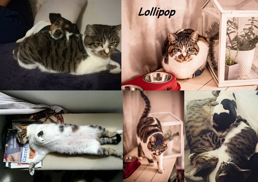 LOLLIPOP, chat femelle Lollip10
