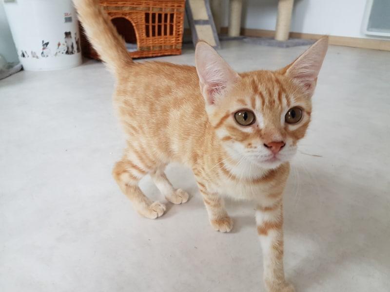 MAKI, chat mâle Maki2310