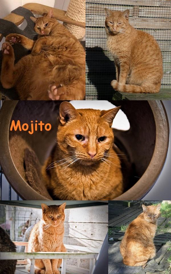 MOJITO et SOHO : annonces types pour sites gratuits Mojito31