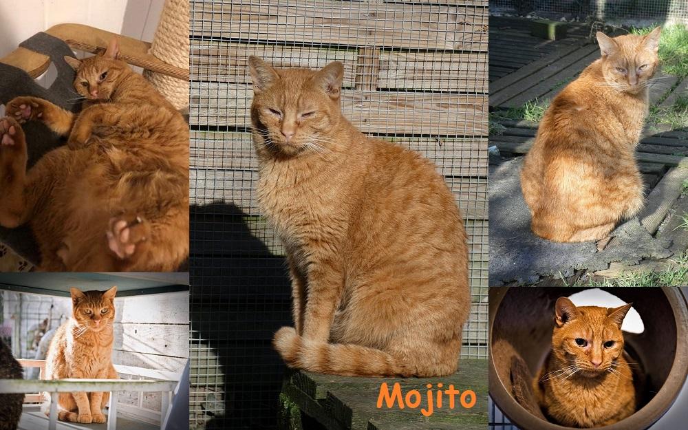 MOJITO et SOHO : annonces types pour sites gratuits Mojito32