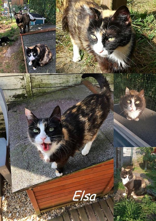 ELSA, chat femelle Nouvea11
