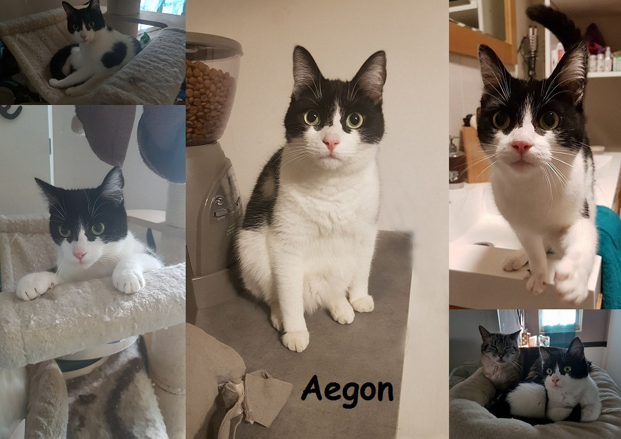 AEGON, chat mâle Nouvea33