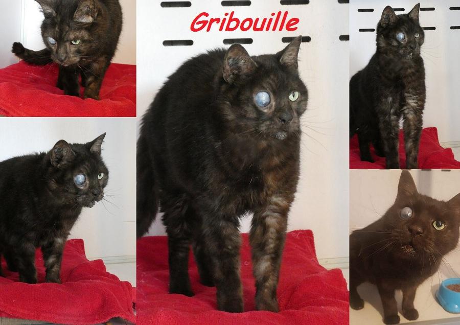 GRIBOUILLE, chat mâle Nouvea34