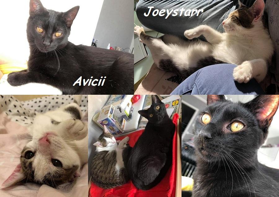 JOEYSTARR et AVICII, chats mâles Nouvea43