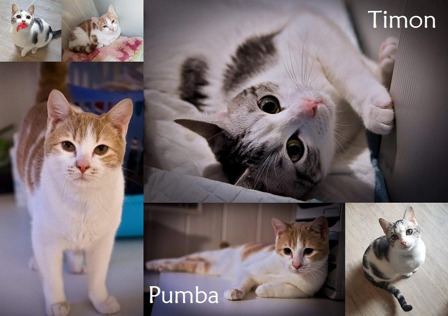TIMON et PUMBA, chats mâles Nouvea63