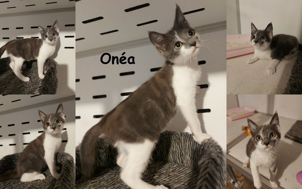 ONEA : annonce type pour sites gratuits Onzoa110