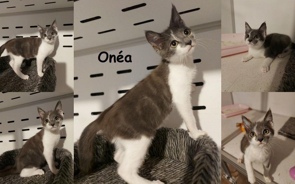 ONEA, chat femelle Onzoa113