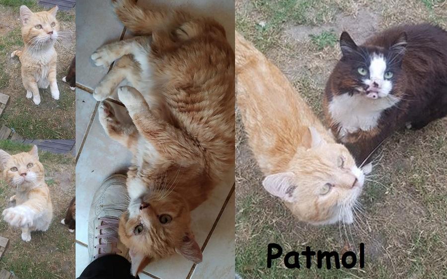 PATMOL : annonce type pour sites gratuits Patmol15