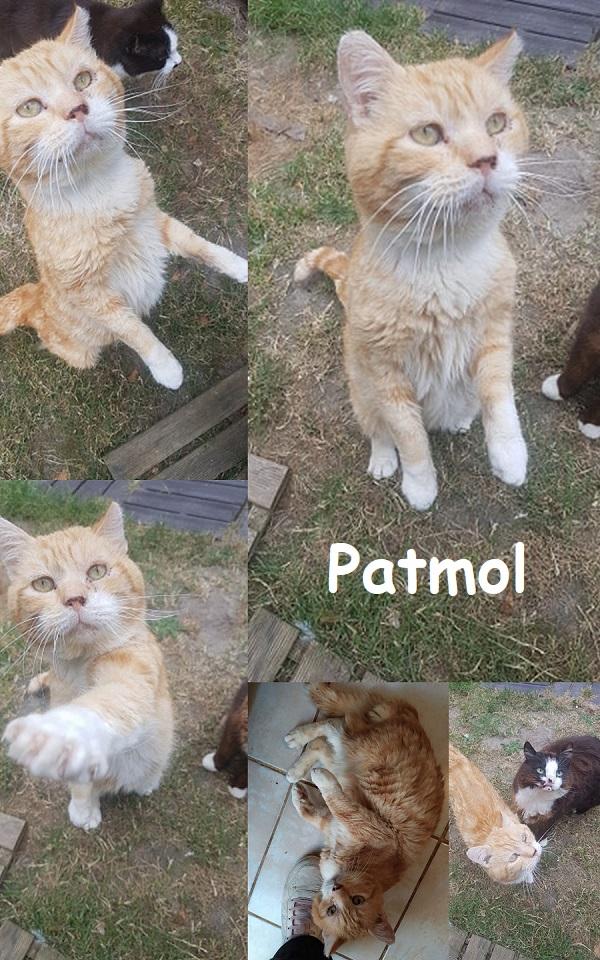 PATMOL : annonce type pour sites gratuits Patmol16
