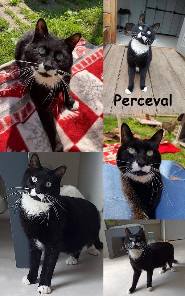 PERCEVAL : annonce type pour sites gratuits Percev11