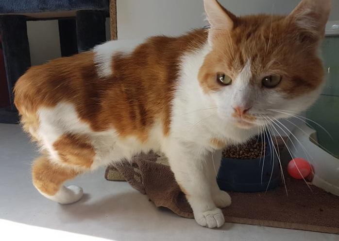 POTIRON, chat mâle Potiro18