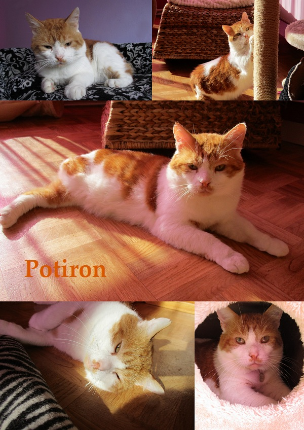 POTIRON : annonce type pour sites gratuits Potiro19