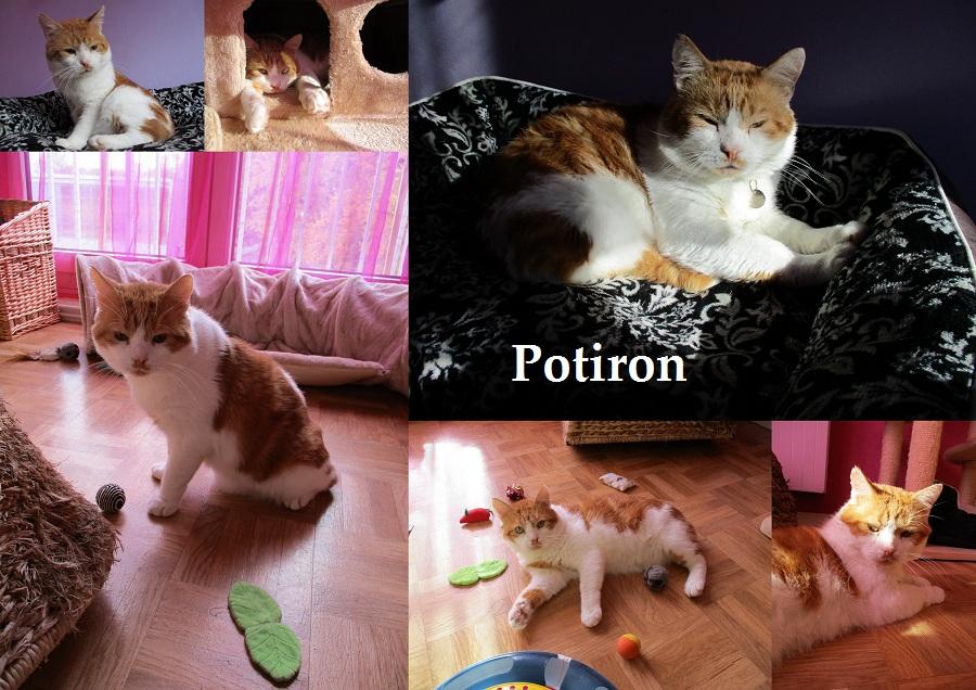 POTIRON : annonce type pour sites gratuits Potiro20