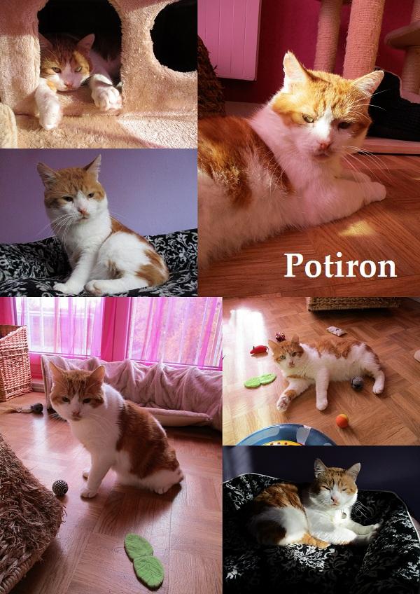 POTIRON : annonce type pour sites gratuits Potiro22