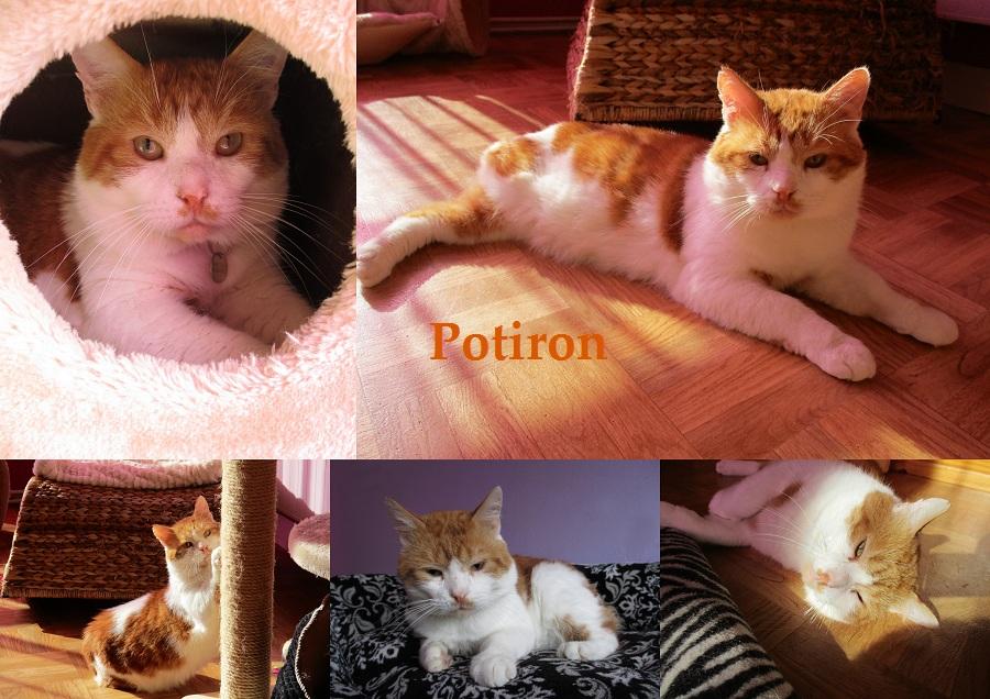 POTIRON chat mâle Potiro23