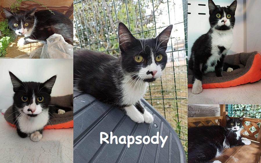 RHAPSODY : annonce type pour sites gratuits Rhapso10