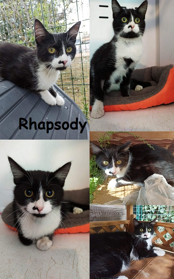 RHAPSODY : annonce type pour sites gratuits Rhapso11