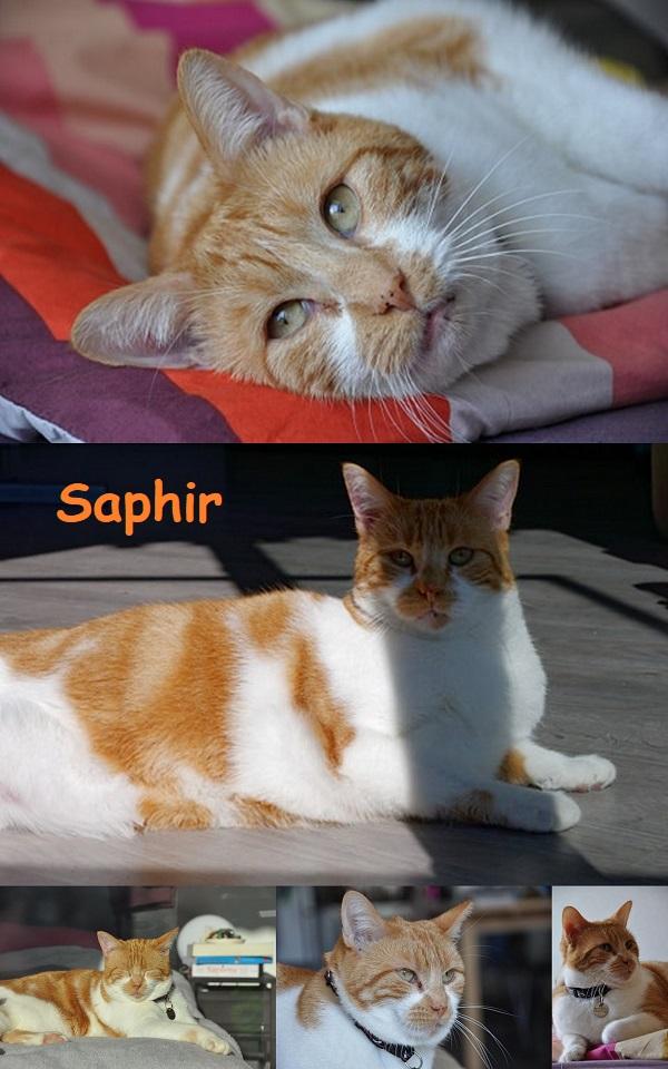 SAPHIR : annonces types pour sites gratuits Saphir24