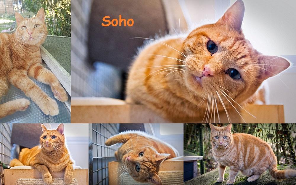 MOJITO et SOHO : annonces types pour sites gratuits Soho4710