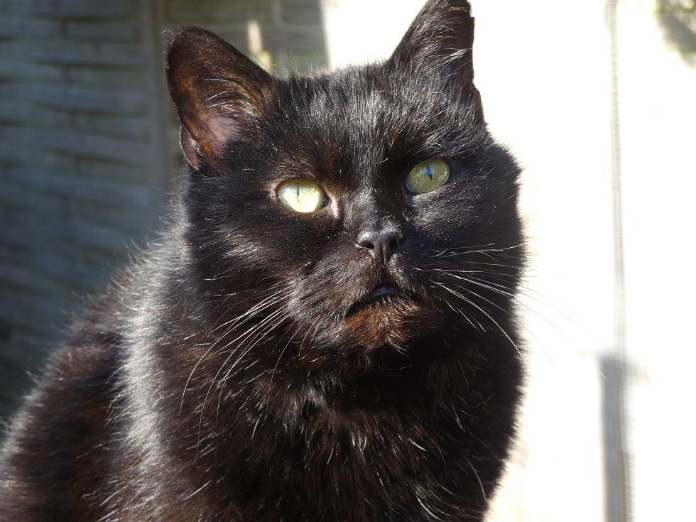 SOREN, 8 ans, câlinou FIV à adopter sans chat (27) - Page 2 Soren518