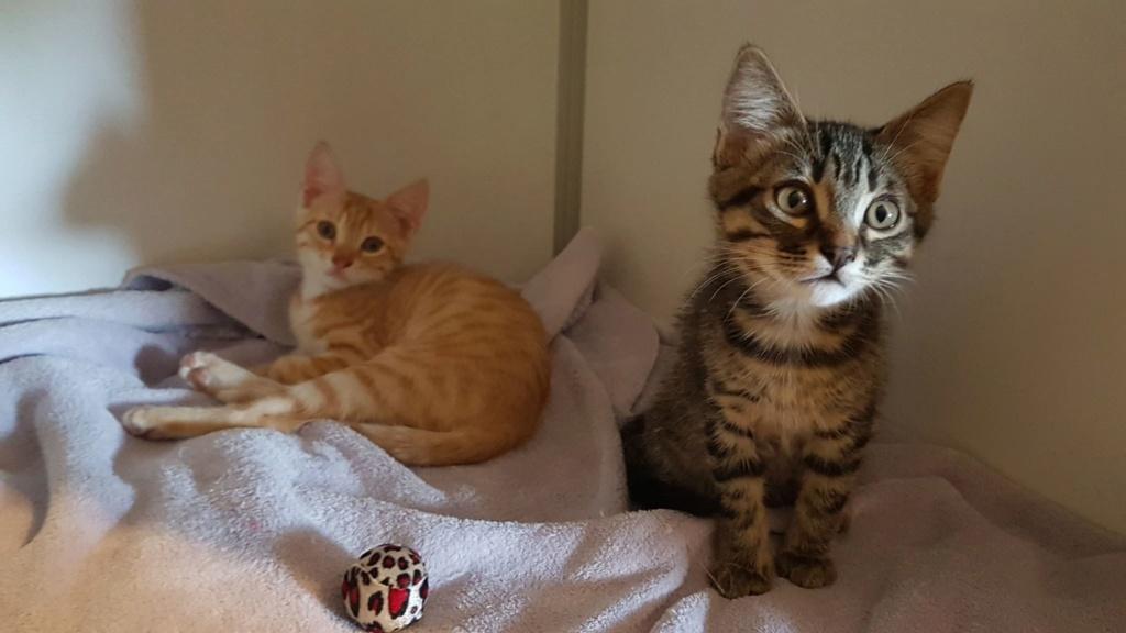 SASHIMI et MAKI, chatons mâles Sushi_10