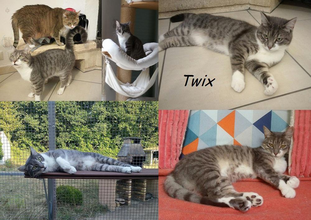 TWIX, chat mâle Twix010
