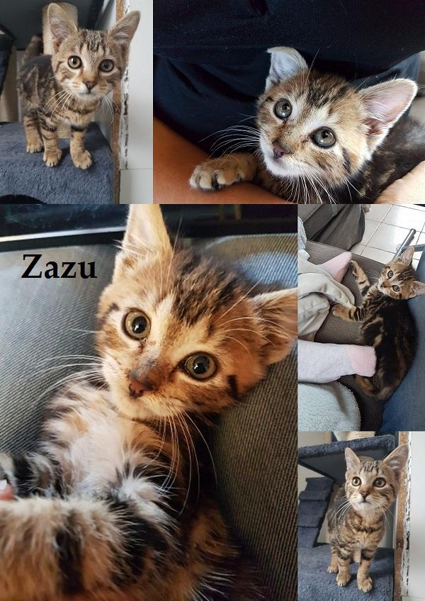 ZAZU : annonce type pour sites gratuits Zazu611