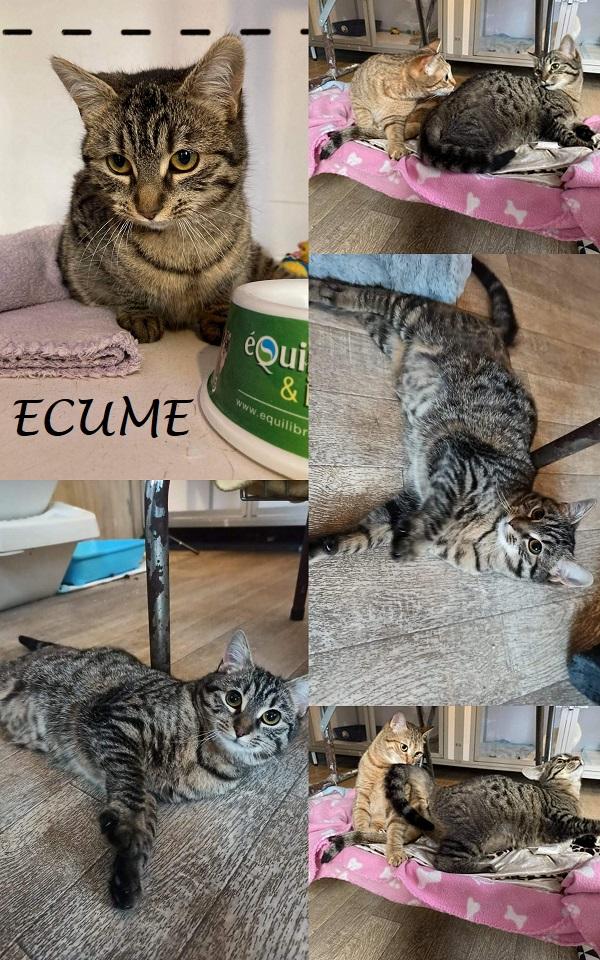 ECUME : annonce type pour sites gratuits Zocume10