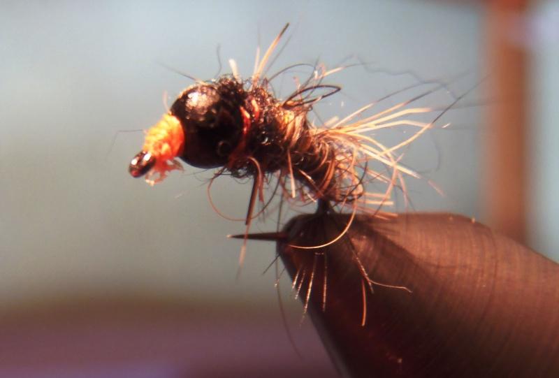 Vos cinq mouches préféres Pa160010