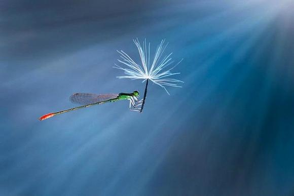 Thế giới côn trùng đẹp như trong thần thoại  Dqwm10