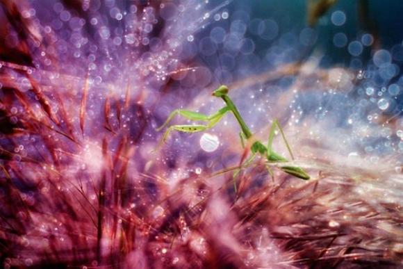 Thế giới côn trùng đẹp như trong thần thoại  Dqxm10