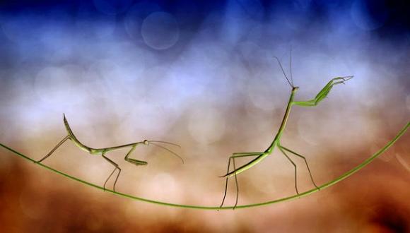 Thế giới côn trùng đẹp như trong thần thoại  Dqym10