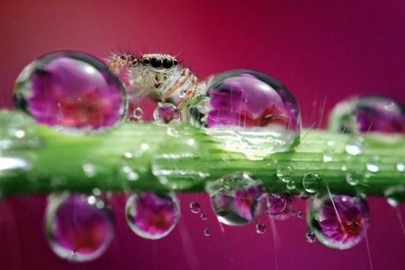 Thế giới côn trùng đẹp như trong thần thoại  Dqzm10