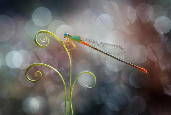 Thế giới côn trùng đẹp như trong thần thoại  Dr2m10