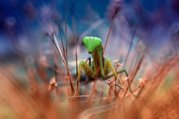 Thế giới côn trùng đẹp như trong thần thoại  Dr3m10