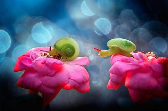 Thế giới côn trùng đẹp như trong thần thoại  Dr4m10