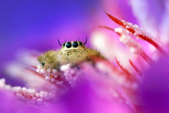 Thế giới côn trùng đẹp như trong thần thoại  Drdm10