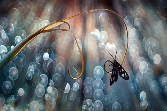 Thế giới côn trùng đẹp như trong thần thoại  Drgm10