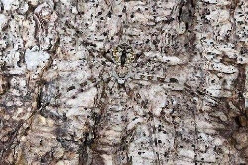 Động vật: cao thủ ngụy trang  Nguytr12