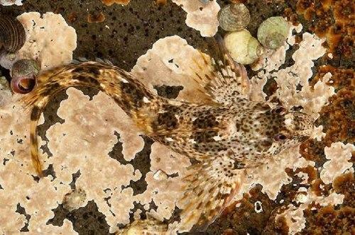 Động vật: cao thủ ngụy trang  Nguytr17
