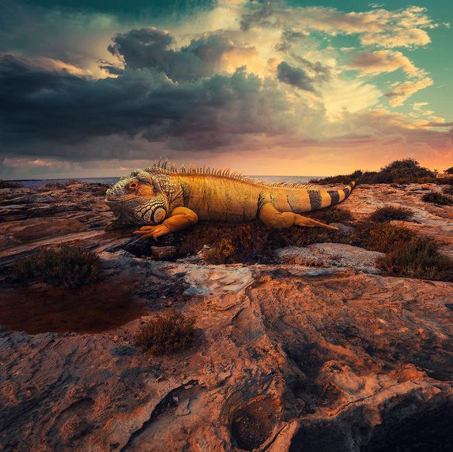 Thế giới tưởng tượng trong loạt ảnh photoshop The-la10