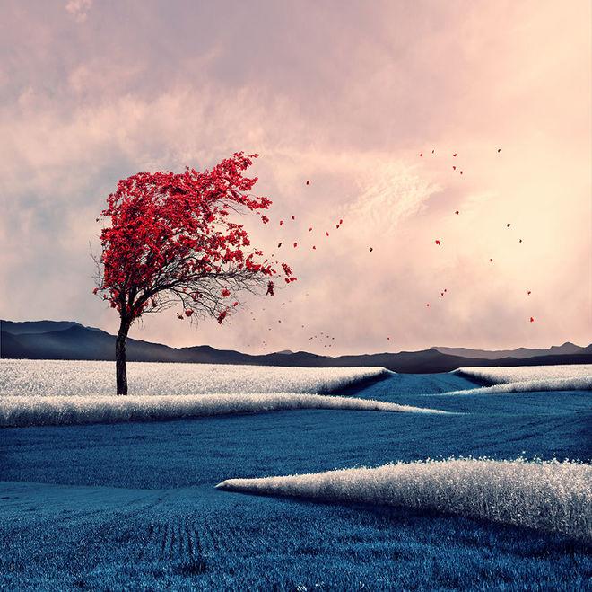 Thế giới tưởng tượng trong loạt ảnh photoshop Tree-d10