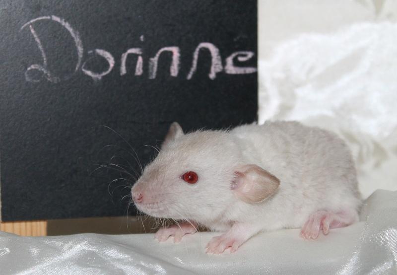 16 ratons a l'adoption , encore 5 loulous  photos P3 Img_7810